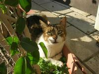 gatto del porto - 12 febbraio 2011  - Castellammare del golfo (956 clic)