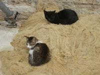 gatti al porto - 25 settembre 2011  - Castellammare del golfo (620 clic)