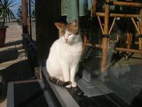 gatto del porto - 12 febbraio 2011  - Castellammare del golfo (1071 clic)