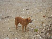 Baia di Guidaloca - cane randagio - 30 ottobre 2011  - Castellammare del golfo (846 clic)