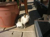 gatto del porto - 12 febbraio 2011  - Castellammare del golfo (1156 clic)
