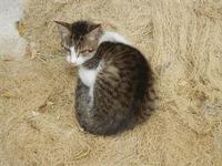 gatto al porto - 25 settembre 2011  - Castellammare del golfo (711 clic)