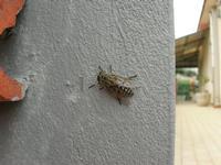 una mosca . . . particolare - 29 maggio 2010  - Alcamo (1752 clic)