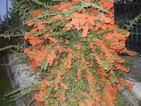 flora lungo la strada - Monte Bonifato - 29 settembre 2011  - Alcamo (654 clic)