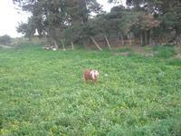 pony - 27 marzo 2011  - Valderice (1444 clic)