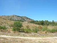 Tempio - 1 agosto 2010  - Segesta (2958 clic)