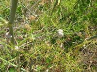 flora e babbaluci - 1 agosto 2010  - Segesta (1785 clic)