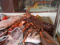 pesci in vetrina - La Cambusa - 25 settembre 2011  - Castellammare del golfo (711 clic)