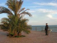 al belvedere - 21 febbraio 2010   - Marinella di selinunte (2377 clic)