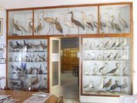 Museo Ornitologico - 19 settembre 2010  - Mazara del vallo (1017 clic)