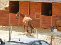 BAGLIO NOVO - cavalla con puledro - 15 agosto 2011  - Fulgatore (936 clic)