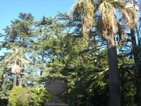 Villa Patti - vaso e giardino - 5 dicembre 2010 CALTAGIRONE LIDIA NAVARRA