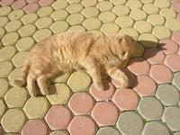 gatto al sole - Apicoltura Cannizzaro - 5 dicembre 2010  - Grammichele (1878 clic)