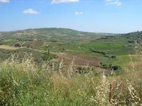 Riserva Naturale Grotta di Santa Ninfa - panorama - 6 giugno 2010   - Santa ninfa (2035 clic)