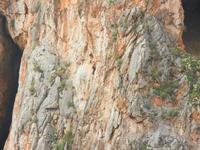 free climbing - falesia all'Isulidda - 1 maggio 2011  - Macari (1607 clic)