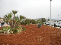 LIDO VALDERICE - aiuola con palma nana ed agave - 25 aprile 2011   - Valderice (1573 clic)