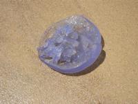 medusa spiaggiata - 6 agosto 2011  - Alcamo marina (1476 clic)
