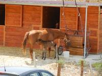 BAGLIO NOVO - cavalla con puledro - 15 agosto 2011  - Fulgatore (884 clic)