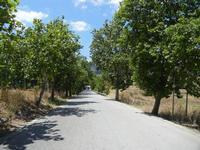 viale alberato - 7 luglio 2011  - Segesta (794 clic)