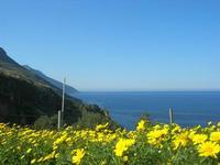 margherite sul mare - 3 aprile 2011  - Riserva dello zingaro (674 clic)