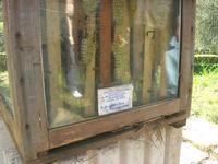 visita all'Apicoltura Cannizzaro - arnia da osservazione - 5 dicembre 2010  - Grammichele (5810 clic)