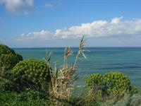 vista sul mare dalla periferia est della città - 8 febbraio 2010  - Castellammare del golfo (1586 clic)