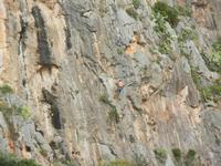 free climbing - falesia all'Isulidda - 1 maggio 2011  - Macari (1646 clic)