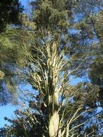 Villa Patti - giardino - particolare - 5 dicembre 2010 CALTAGIRONE LIDIA NAVARRA
