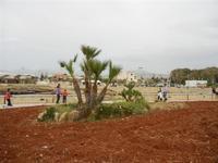 LIDO VALDERICE - aiuola con palma nana - 25 aprile 2011   - Valderice (1240 clic)