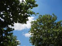 alberi, cielo e nuvole - 7 luglio 2011  - Segesta (784 clic)
