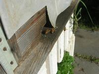 visita all'Apicoltura Cannizzaro - arnia - api - 5 dicembre 2010  - Grammichele (2606 clic)