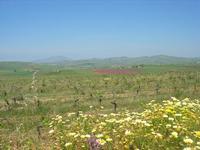 la campagna a primavera - all'orizzonte il Monte Erice - 1 maggio 2010  - Fulgatore (2891 clic)
