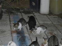 gatti al porto - 31 ottobre 2011  - Castellammare del golfo (653 clic)