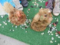 gallina e coniglietto: animali finti in Via Savoia - 19 luglio 2011  - San vito lo capo (856 clic)