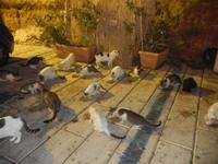gatti al porto - 31 ottobre 2011  - Castellammare del golfo (757 clic)