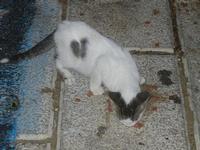 gatto al porto - 31 ottobre 2011  - Castellammare del golfo (620 clic)