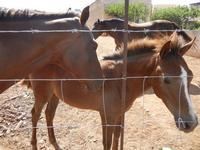 cavalli - 2 agosto 2011  - San vito lo capo (721 clic)