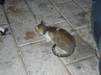 gatto al porto - 31 ottobre 2011  - Castellammare del golfo (796 clic)