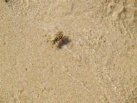 Zona Canalotto - vespa sulla battigia - 17 settembre 2011  - Alcamo marina (717 clic)