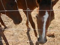 cavalli - 2 agosto 2011  - San vito lo capo (677 clic)