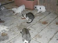 gatti al porto - 31 ottobre 2011  - Castellammare del golfo (643 clic)