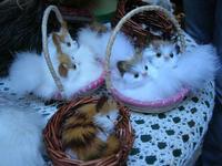 souvenir - gattini - 7 agosto 2010  - Erice (1884 clic)