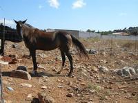 cavalli - 2 agosto 2011  - San vito lo capo (726 clic)
