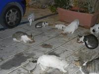 gatti al porto - 31 ottobre 2011  - Castellammare del golfo (649 clic)