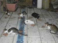gatti al porto - 31 ottobre 2011  - Castellammare del golfo (618 clic)