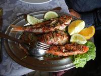 triglie e calamaro arrosto - Turiddu - 22 maggio 2011  - Terrasini (2490 clic)