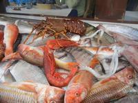 pesci in esposizione - La Cambusa - 30 ottobre 2011  - Castellammare del golfo (918 clic)
