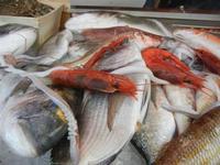 pesci in esposizione - La Cambusa - 30 ottobre 2011  - Castellammare del golfo (736 clic)