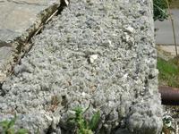 Castello di Rampinzeri - roccia - 6 giugno 2010  - Santa ninfa (2108 clic)
