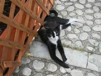 gatto - 21 agosto 2011  - Sambuca di sicilia (1393 clic)